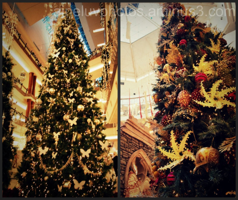 The WHOLE tree :D