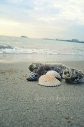 Port Dickson Beach. :)