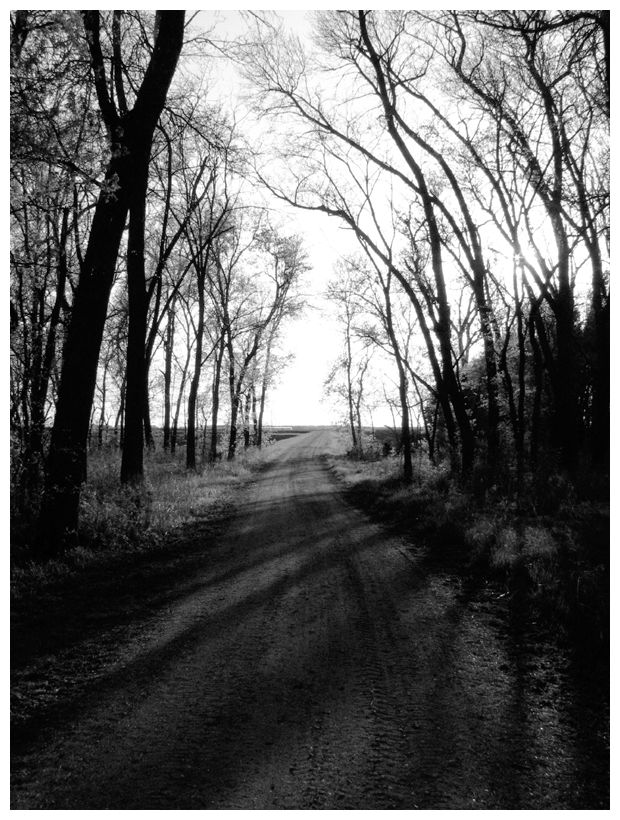Road leading out of my Grandma's century old farm.