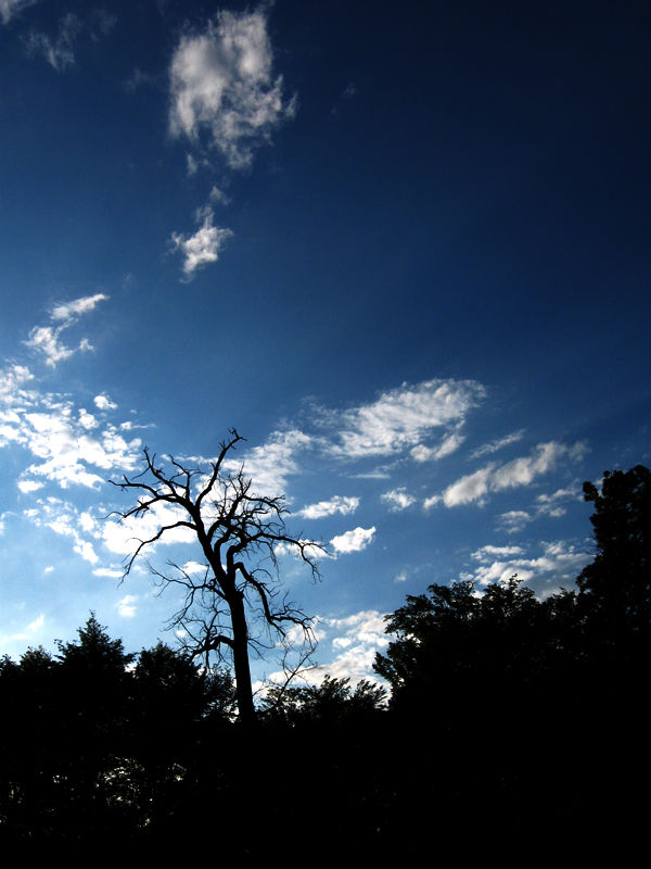 Silhouette of lonely tree against blue sky clouds