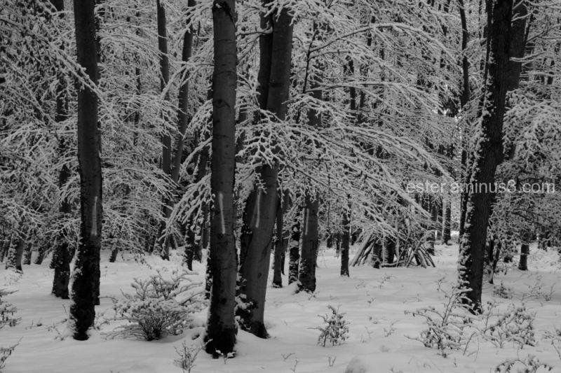 winterlich #1