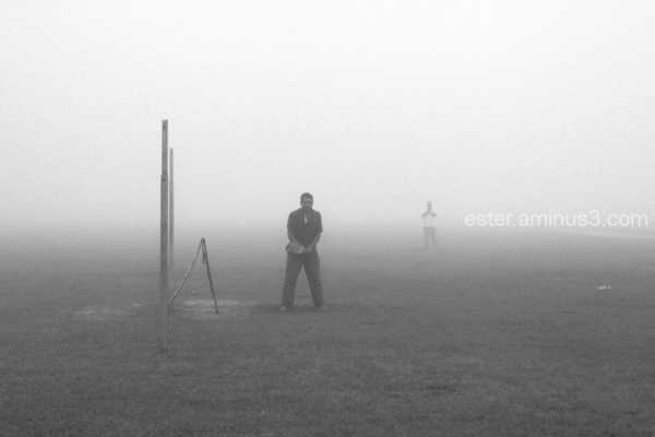 misty cricket-game