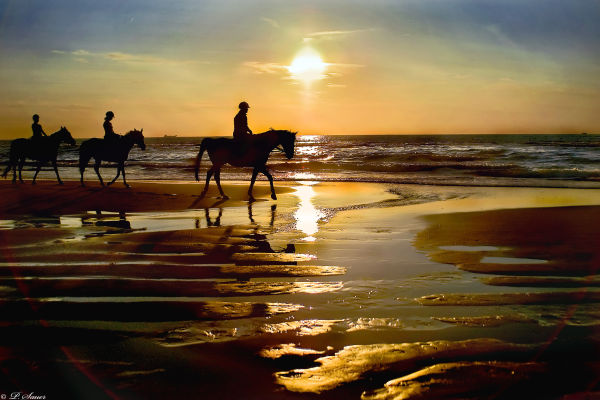 Horse riders on the beach