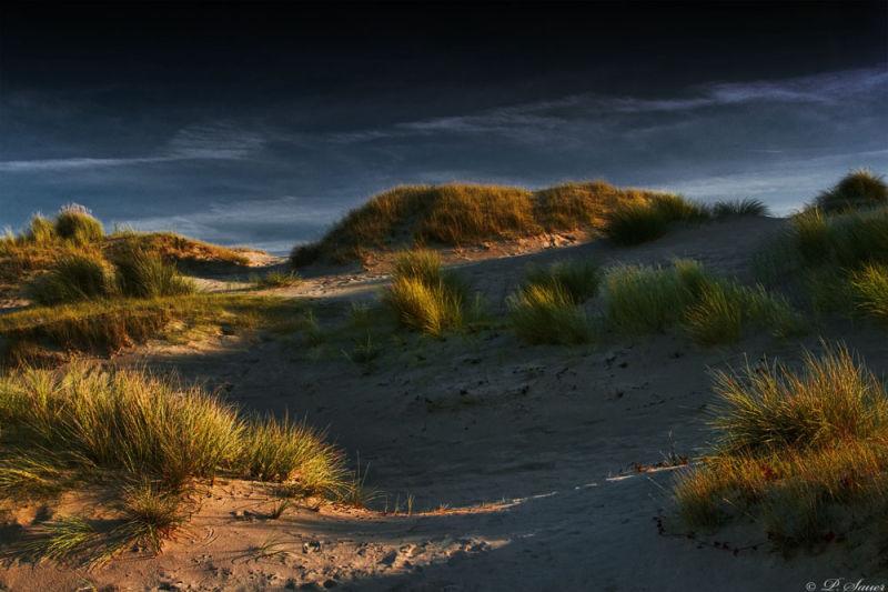 Late sunlight on the dunes
