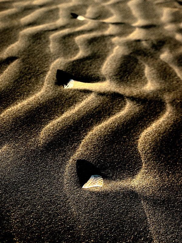 Brokens shells on the beach