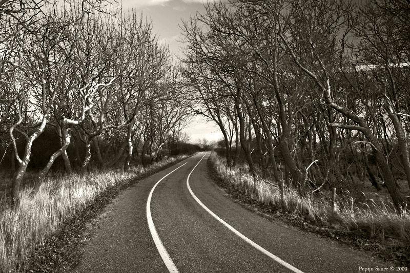 Lane At Dusk
