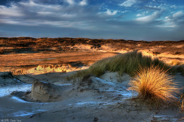 Frozen dunes at the dutch coast