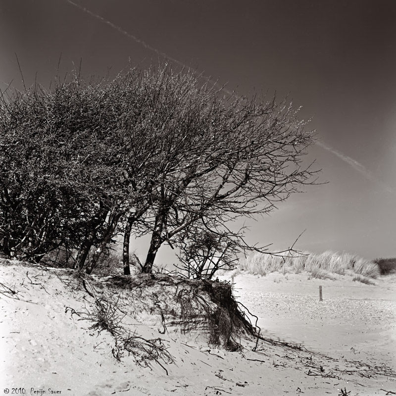 Small bush in the sand dunes
