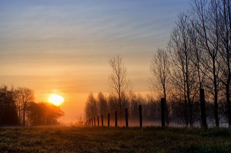 Morning fog on Texel island