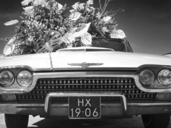 Ford Thunderbird in Flower