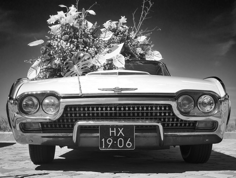 Ford Thunderbird in Flower
