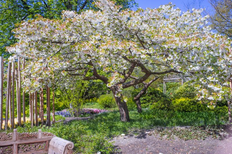 Leiden Botanical Garden