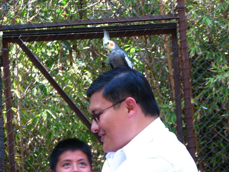 Un ave sobre la cabeza
