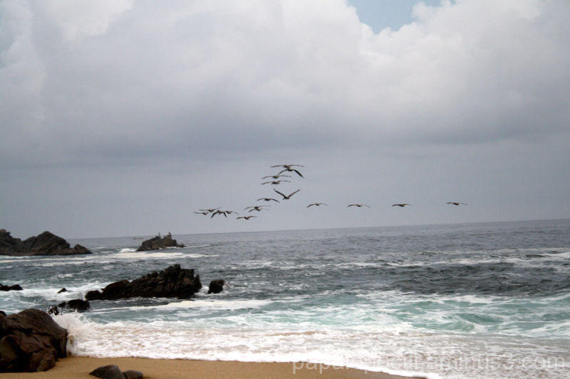 Pelícanos volando en V