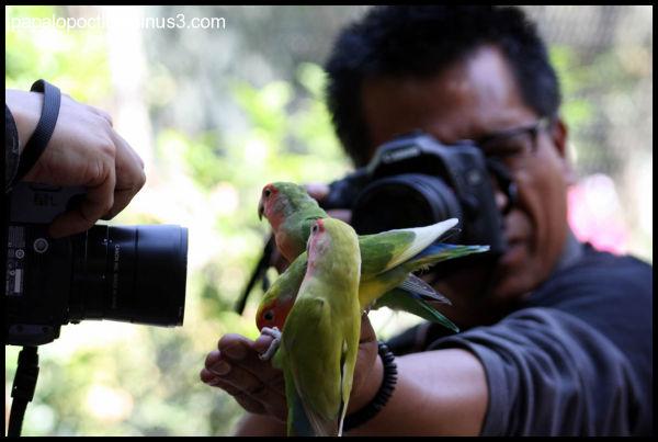 Fotografiando a los periuquitos