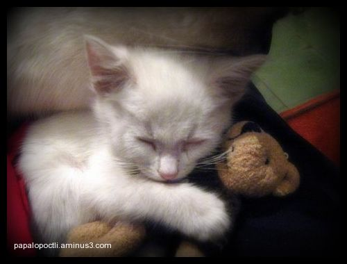 Gatito abrazando un osito de juguete