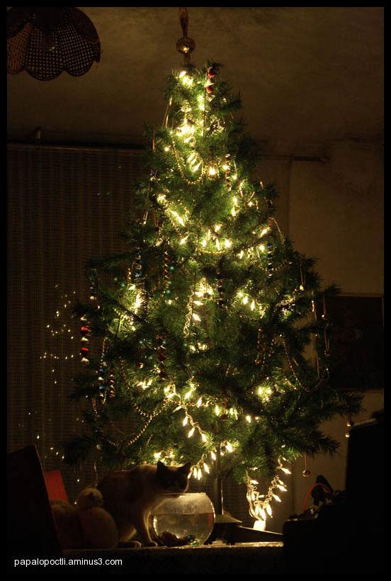 Gtos bajo el árbol de navidad