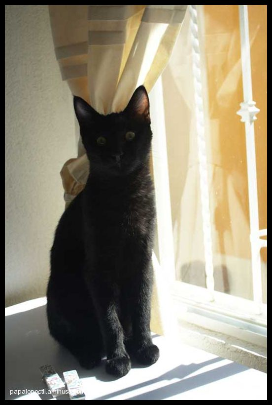 Gato negro junto a la ventana