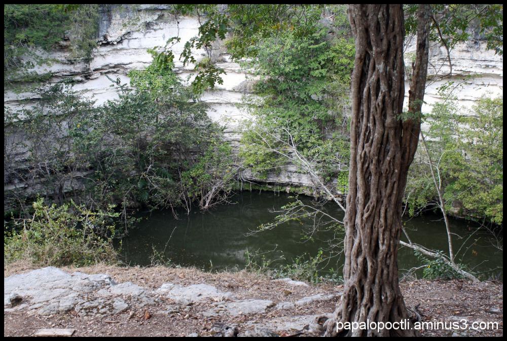Cenote en Chichén Itzá y árbol trenzado