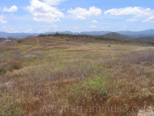 A desert field
