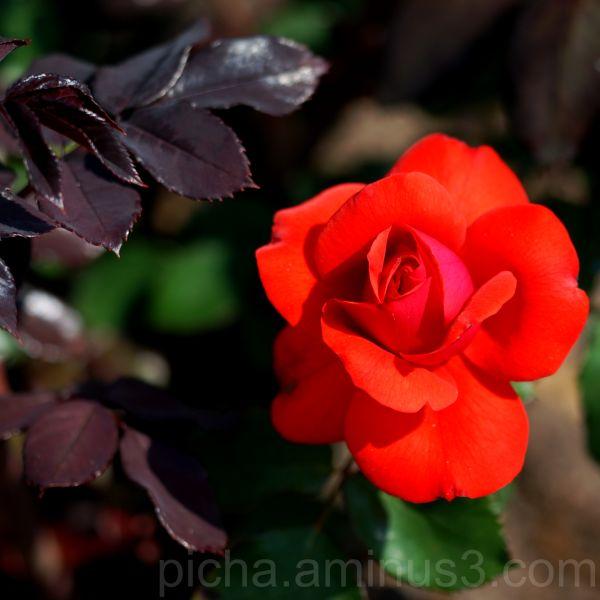 Rose Paltsamaa Estonia