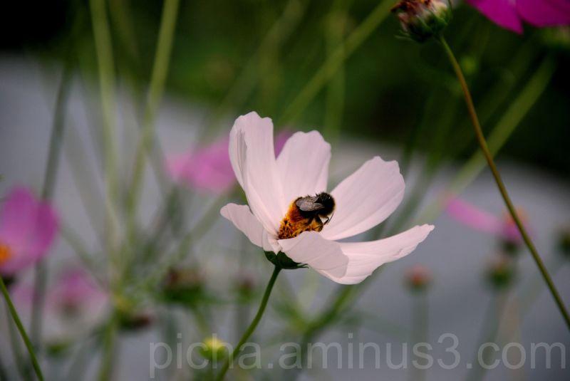 flower bumblebee