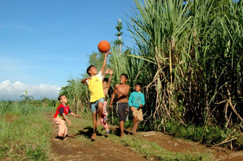 frolic amongst sugarcane field