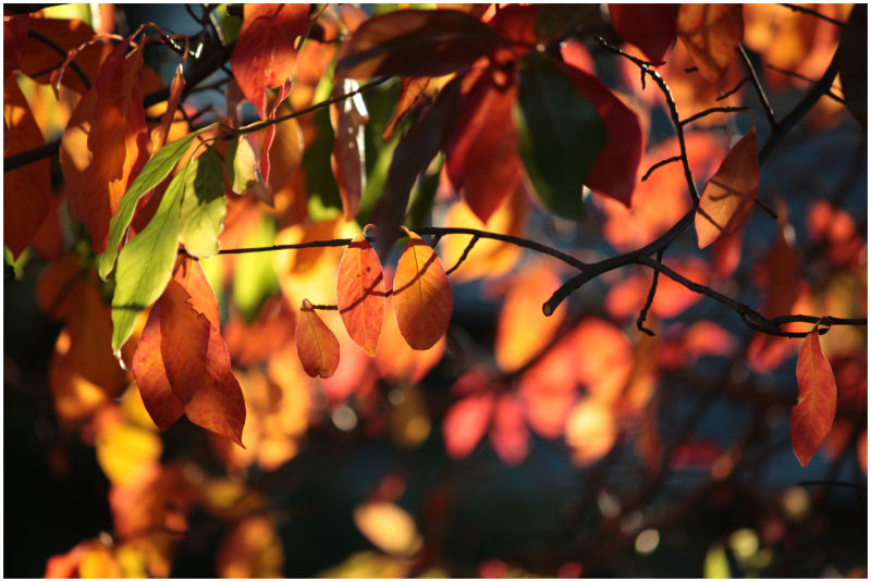 It's Autumn Again.