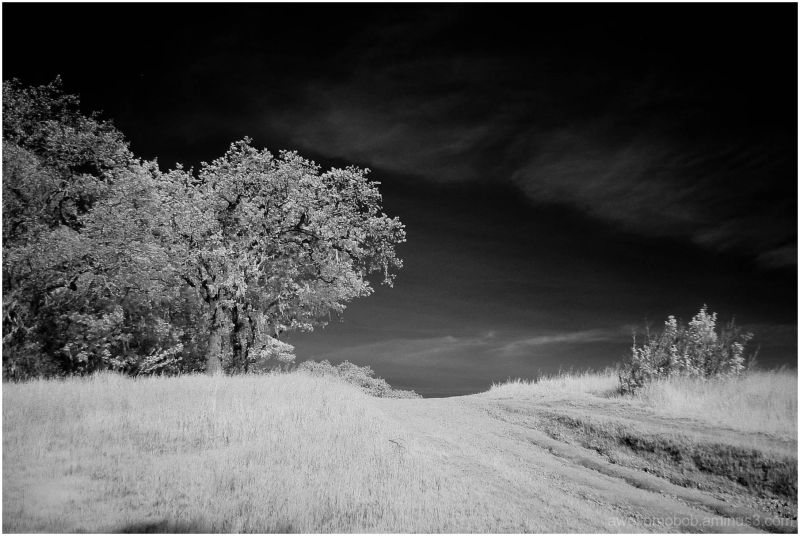 Christmas Hill Infrared