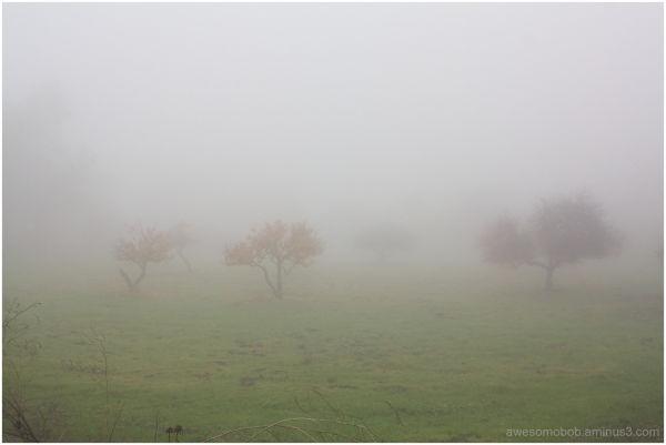 Fog on Mt. Hamilton