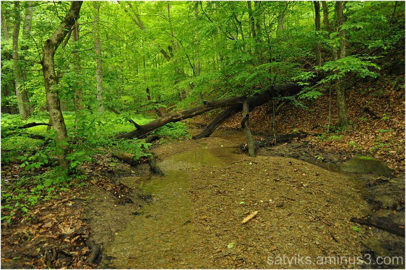 Shallow brook