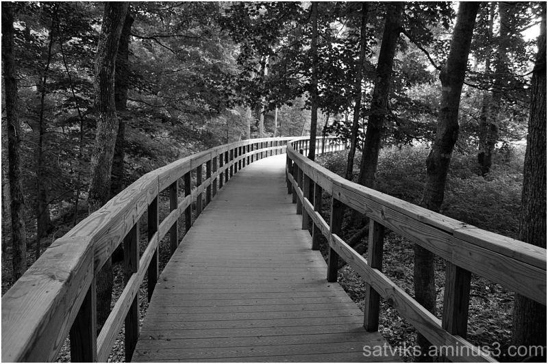 Bridge through the woods (2)