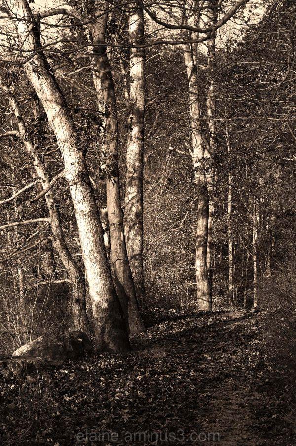 woods, trees