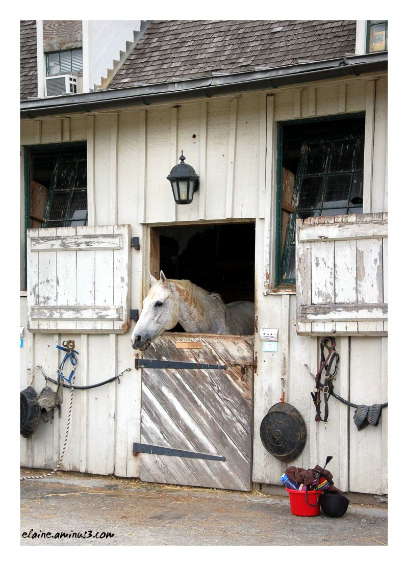 Meadowbrook Stable