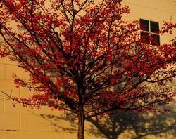 very berry tree