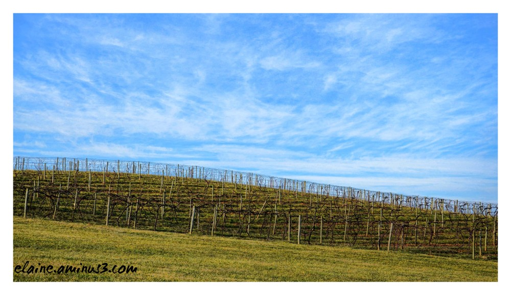 Linganore Winery