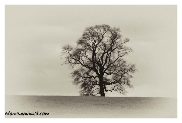 lone tree revisited
