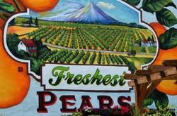 freshest pears