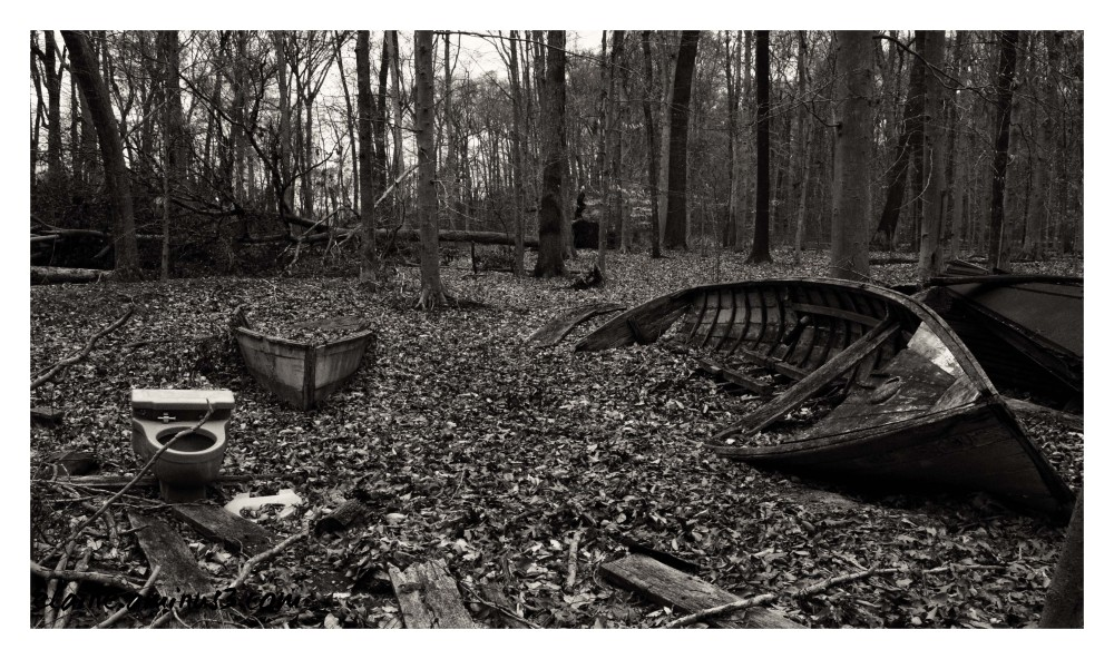 boats in the woods