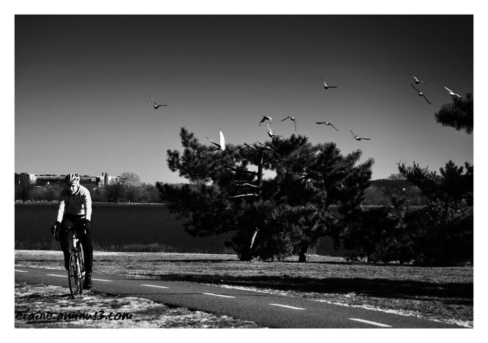 birds and cyclist