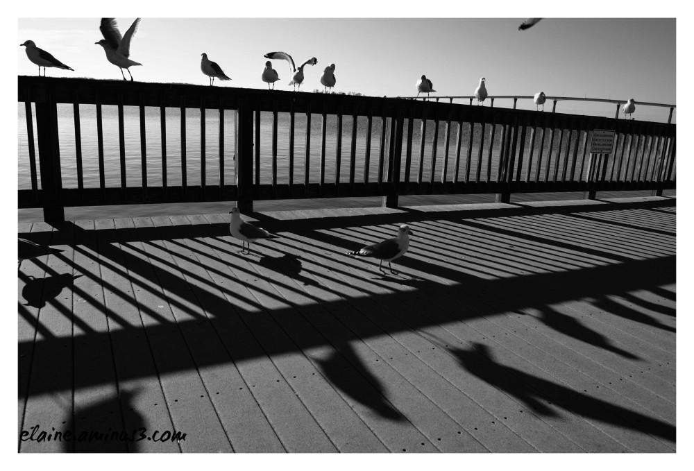 seagull shadows