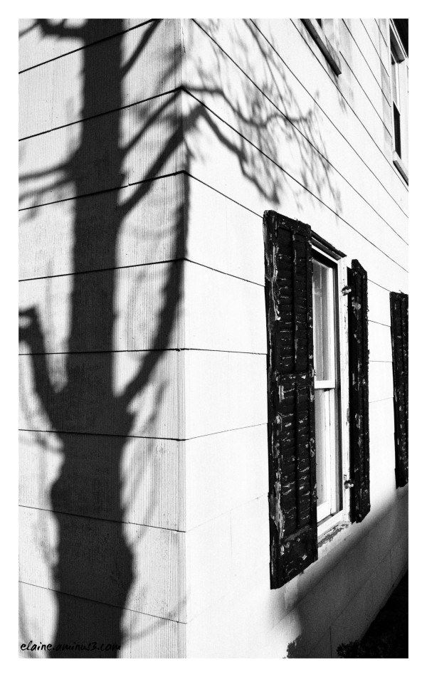 tree shadow and shutters