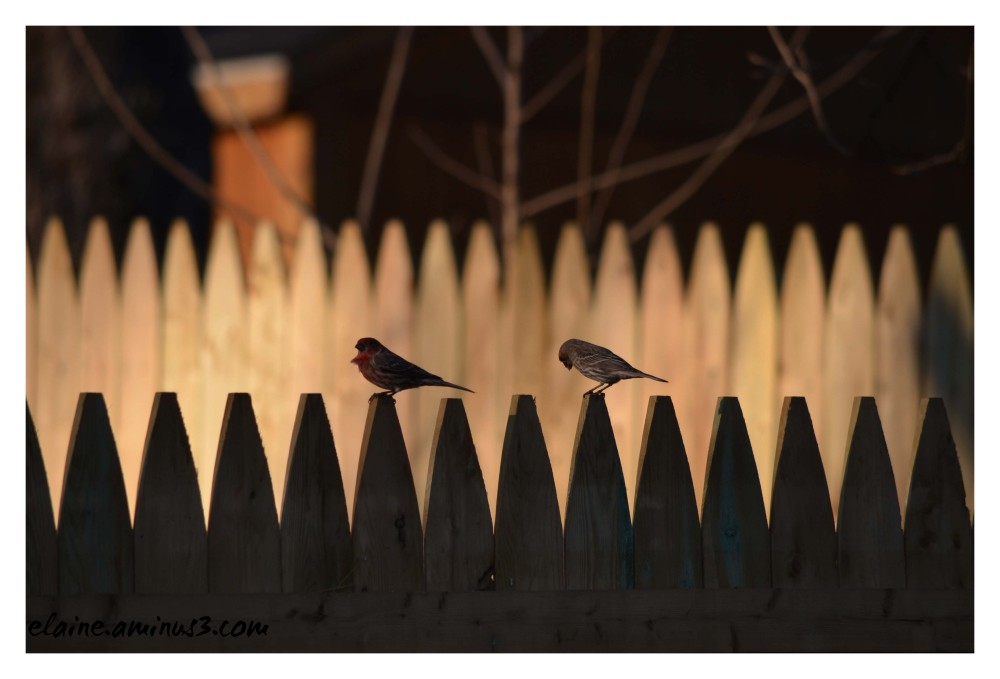 two on a fence