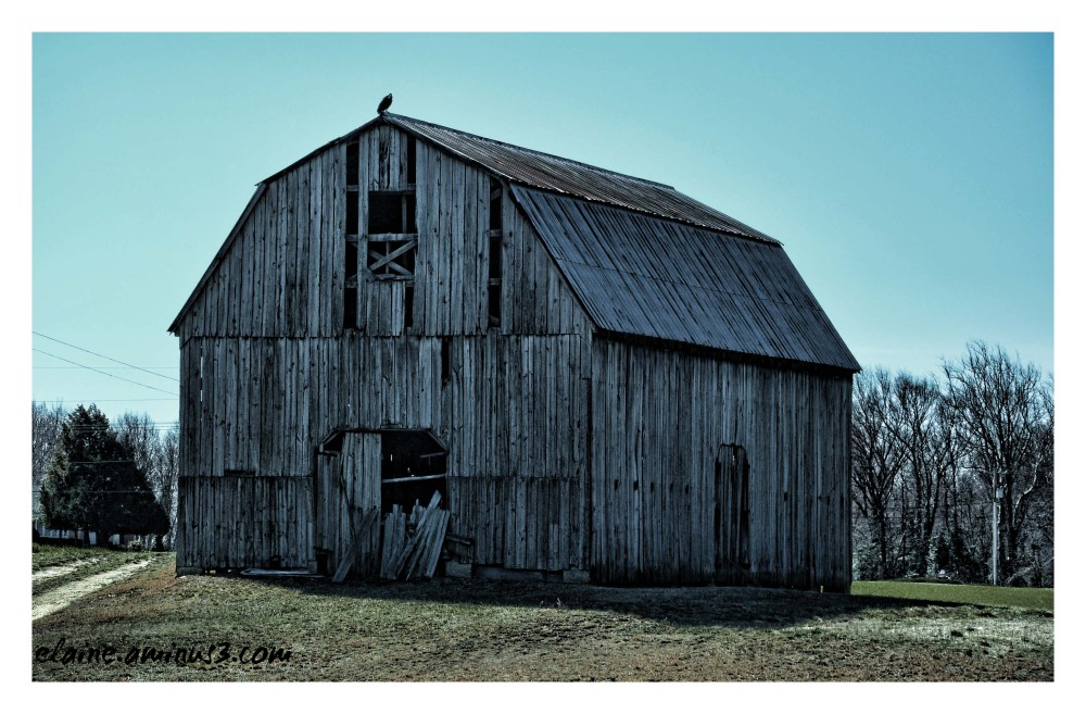 barn and buzzard