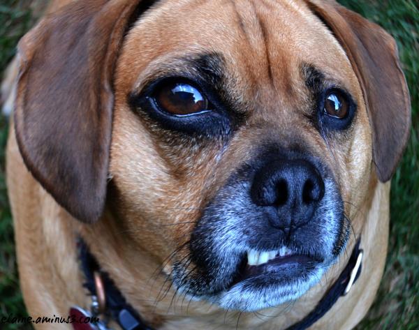 frowning dog