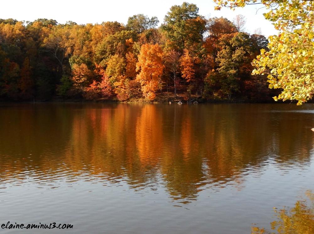 lake needwood trees