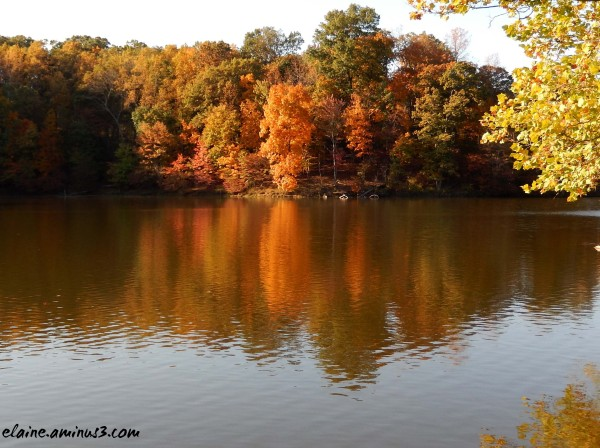 lake needwood trees