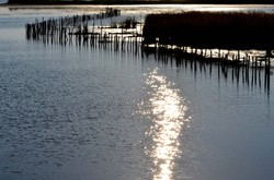 light on the marsh