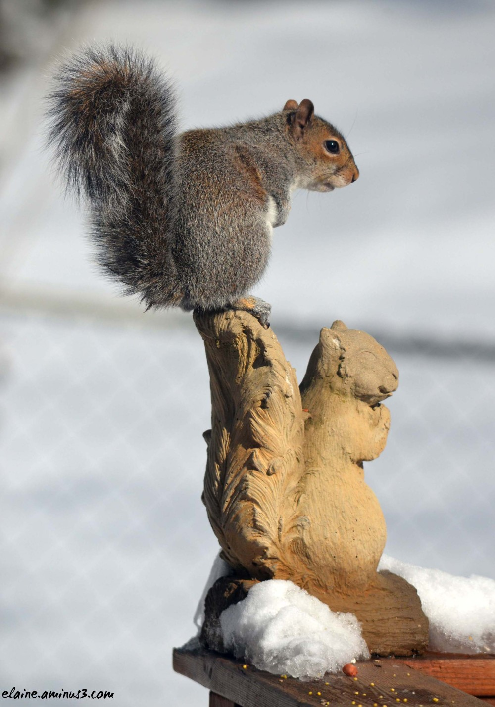 squirrel on squirrel statue