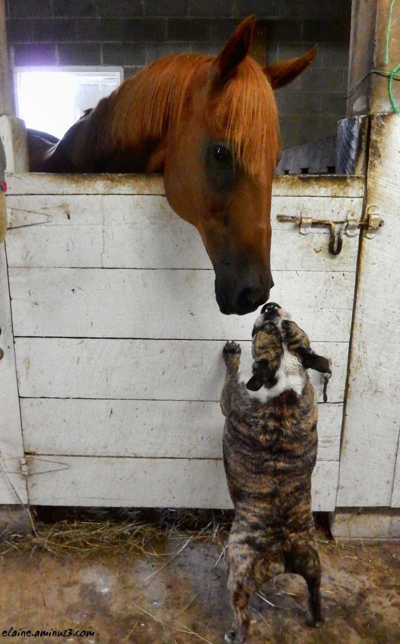 horse and bulldog